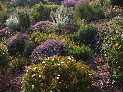 Plantas aut ctonas para jardines sostenibles en vivers carex - Jardin bajo mantenimiento ...